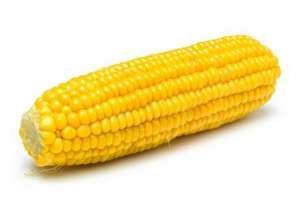 怎样进行选购玉米种子?